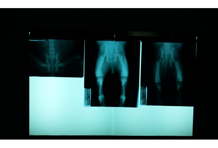 Veterinary x-rays of a an animal for the veterinary field.