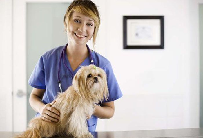 Veterinary assistant tending to a small dog.