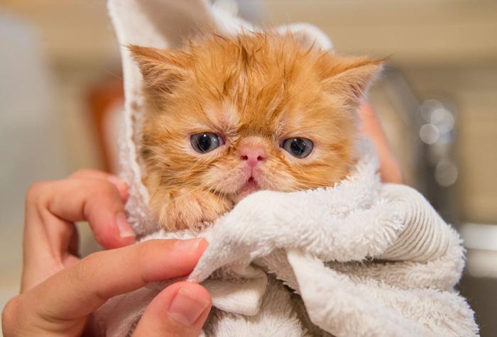 kitten being held by vet tech